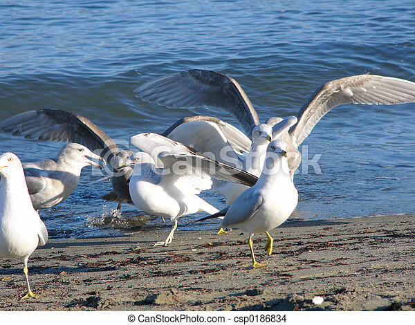 sea-gull - csp0186834