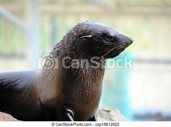 Sea lion - csp18812623