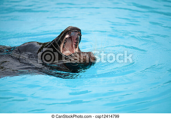 sea lion - csp12414799
