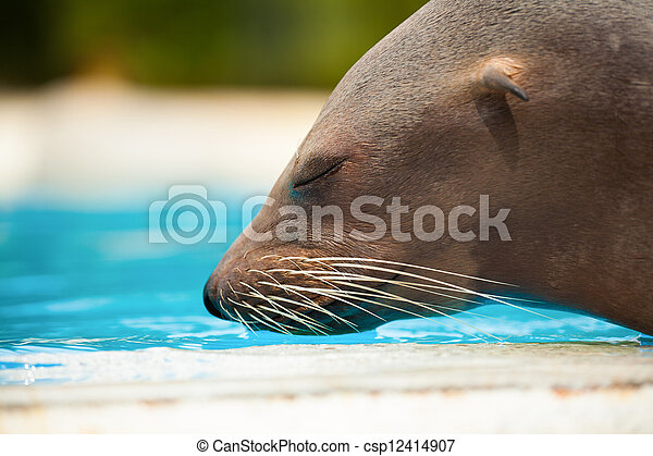 sea lion - csp12414907