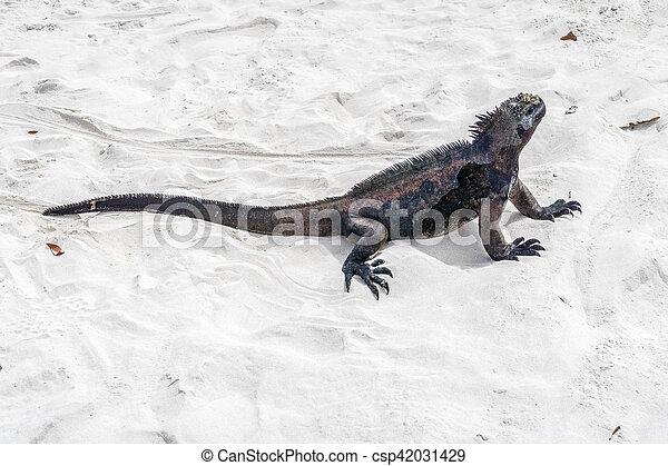 sea lizard on a rock at the beach - csp42031429