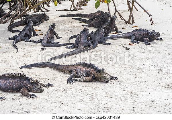 sea lizard on a rock at the beach - csp42031439