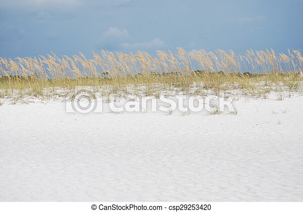 Sea Oats under a Blue Sky  - csp29253420