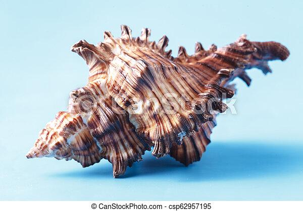Sea shell closeup on blue background - csp62957195