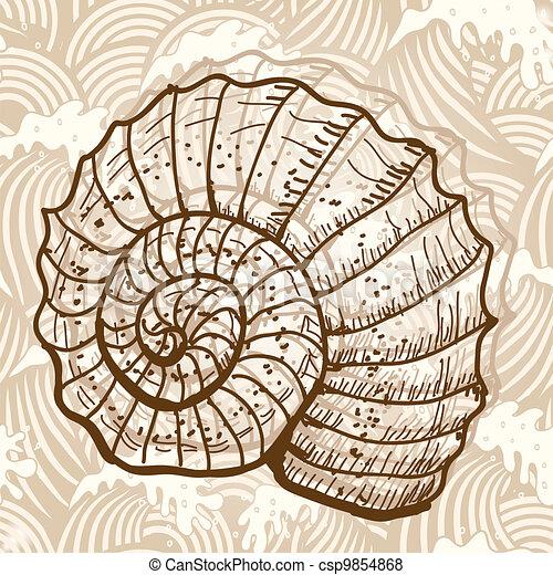 Sea shell - csp9854868
