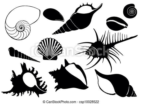 sea shell - csp10028522