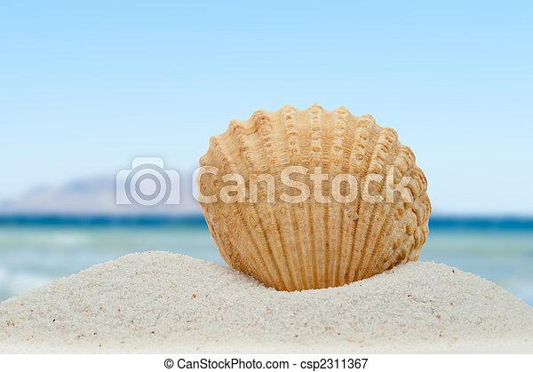 Sea shell on the beach - csp2311367