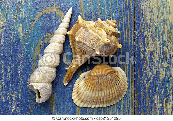 sea shells on blue wooden background - csp21354295