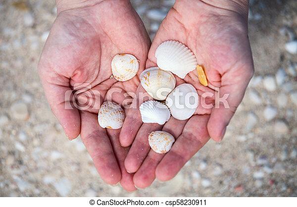 Sea shells - csp58230911