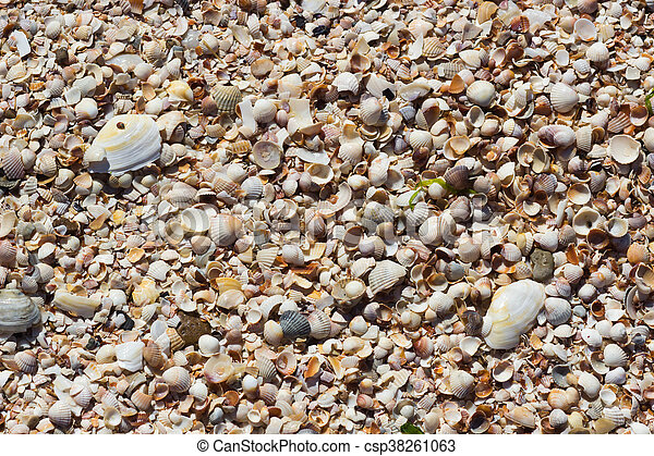 Sea Shells Seashells - csp38261063