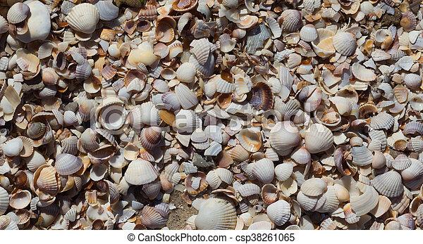 Sea Shells Seashells - csp38261065
