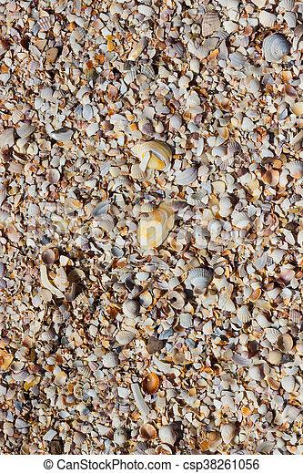 Sea Shells Seashells - csp38261056