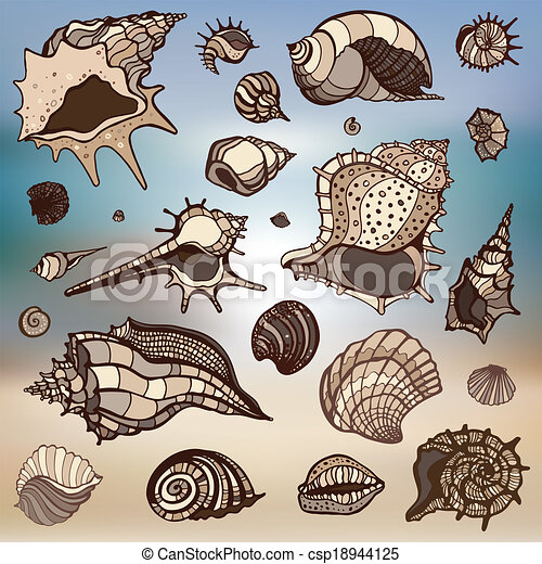 Sea shells set.  Blurred background. - csp18944125