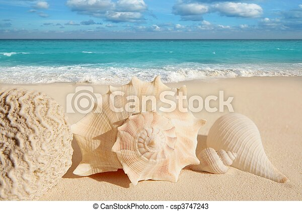 sea shells starfish tropical sand turquoise caribbean - csp3747243