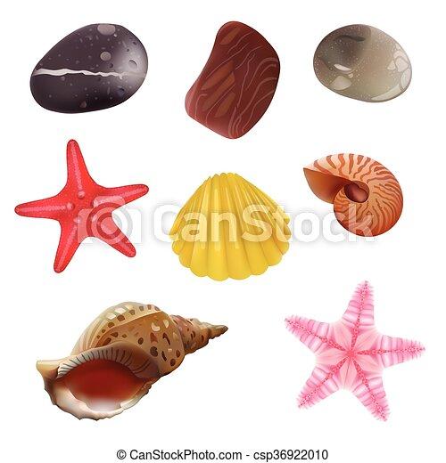 Sea Stones, Sea Shells, Starfish. Isolated Realistic Objects. Vector Set Icons. - csp36922010