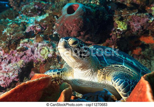 Sea turtle - csp11270683