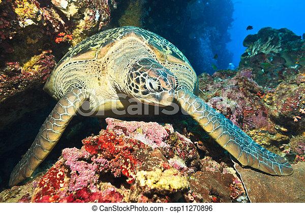 Sea turtle - csp11270896