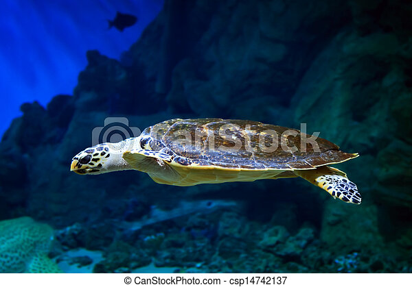Sea turtle swimming over the coral reef - csp14742137