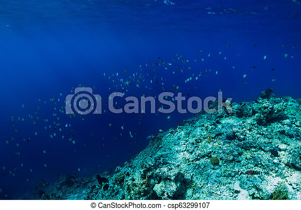 Sea world in underwater with school of tropical fish in ocean at coral reef - csp63299107