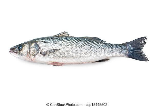 Seabass, Dicentrarchus labrax - csp18445502