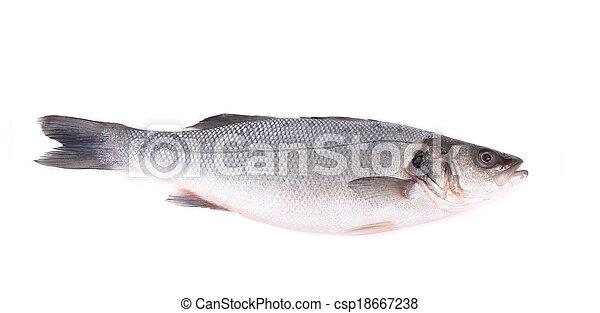 Seabass, Dicentrarchus labrax. - csp18667238