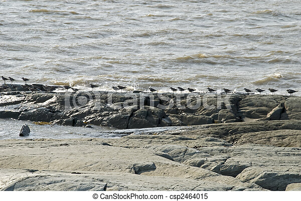 Seabirds lined up on a river shore - csp2464015