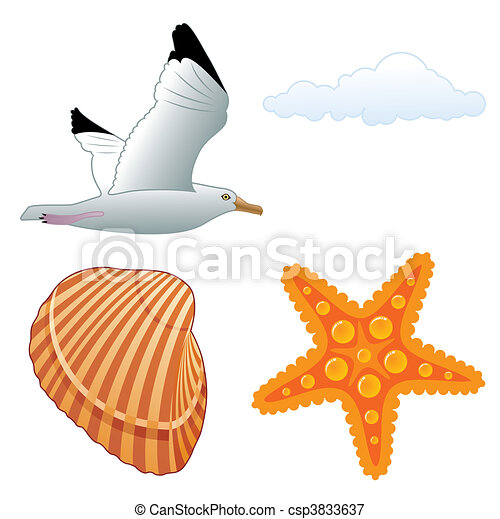 Seagull and shell - csp3833637