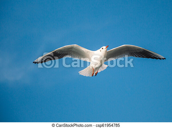 Seagull flying in blue sky - csp61954785
