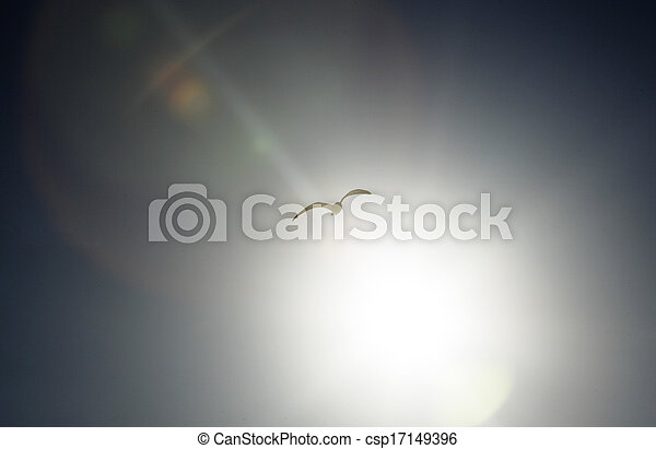 Seagull flying in the sky - csp17149396