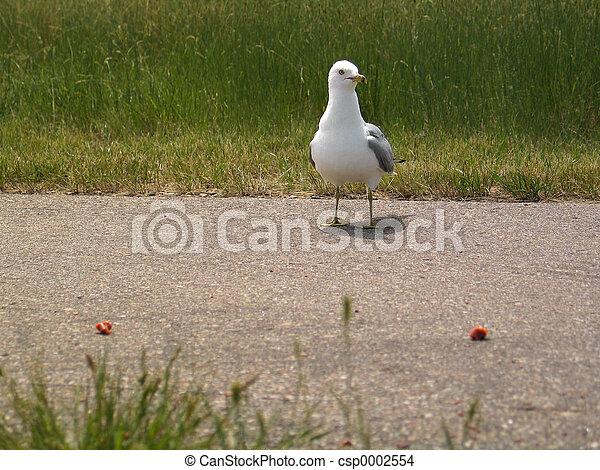 Seagull I - csp0002554