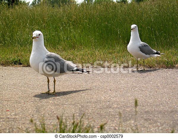 Seagull II - csp0002579