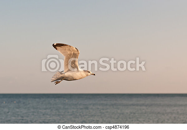 Seagull in Flight Over a Lake - csp4874196