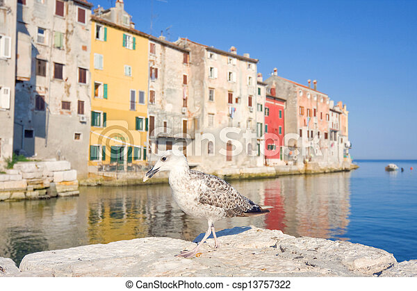 seagull on a background of old buildings, Rovinj, Croatia - csp13757322