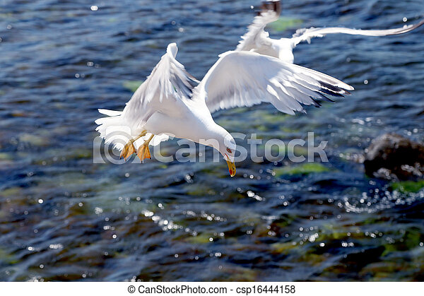 Seagull on a background of the sea - csp16444158