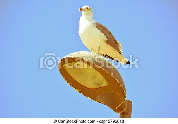 Seagull on a lamp post - csp42796818