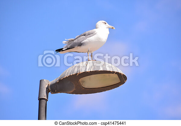 Seagull on a lamp post - csp41475441