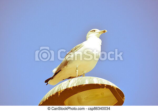 Seagull on a lamp post - csp86340034