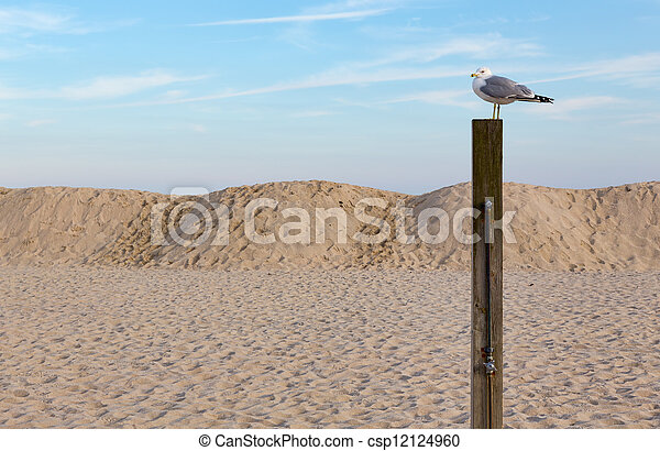 Seagull on a Post at the Beach - csp12124960