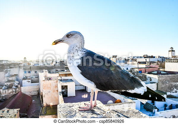 seagull on a post, photo as background - csp85840926