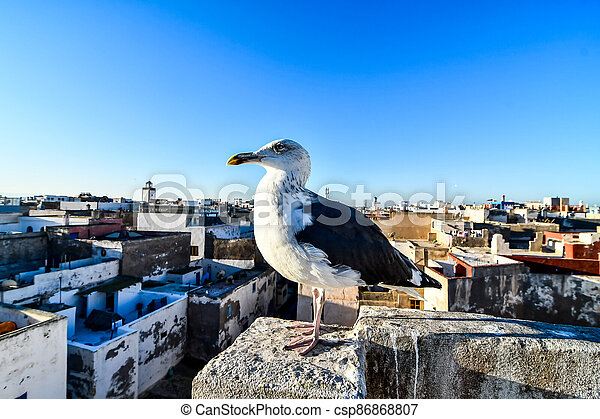 seagull on a post, photo as background - csp86868807