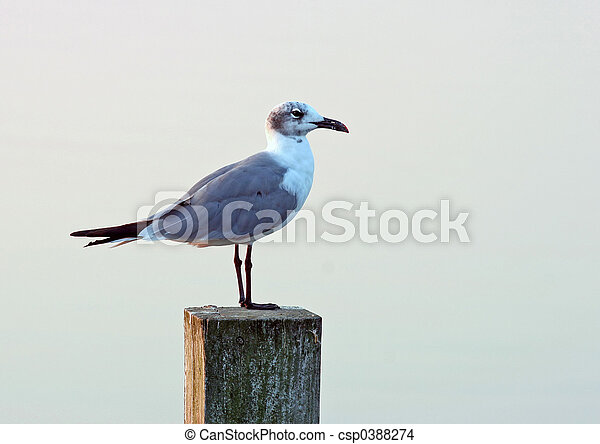 Seagull on a post - csp0388274