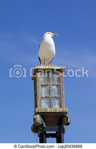Seagull on a street lamp - csp20436669