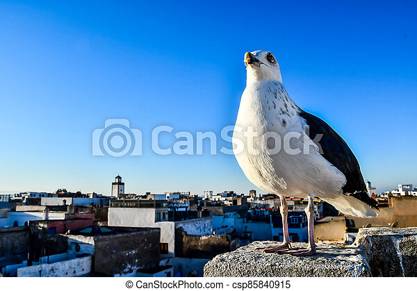 seagull on post, photo as background - csp85840915