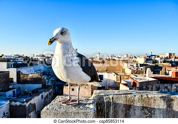 seagull on post, photo as background - csp85853114