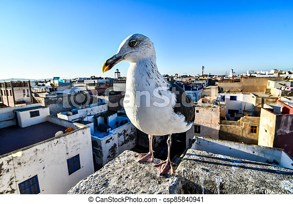 seagull on post, photo as background - csp85840941