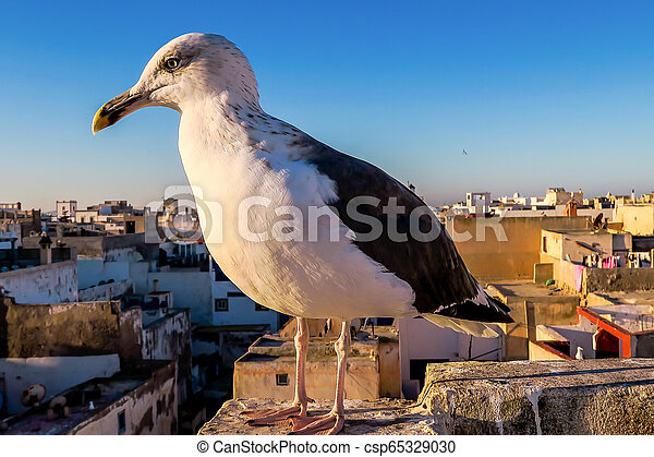 seagull on post, photo as background - csp65329030