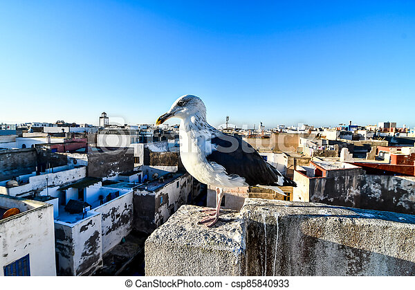 seagull on post, photo as background - csp85840933