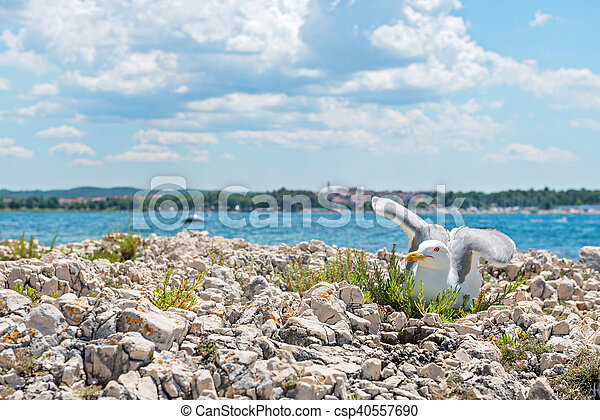 Seagull on the beach in Istria - csp40557690