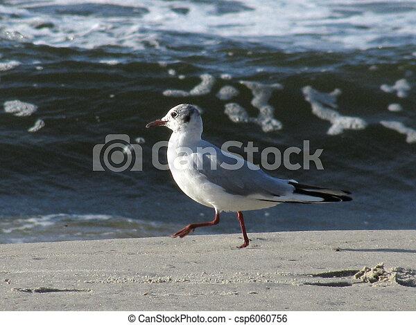 seagull on the beach - csp6060756