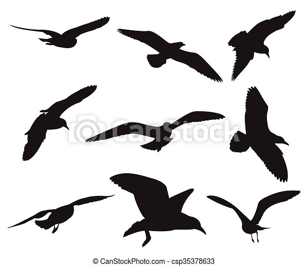 Seagull Set Silhouettes on the white background - csp35378633